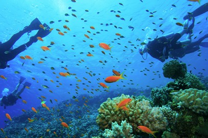 group-suba-diving-on-caribbean-reef
