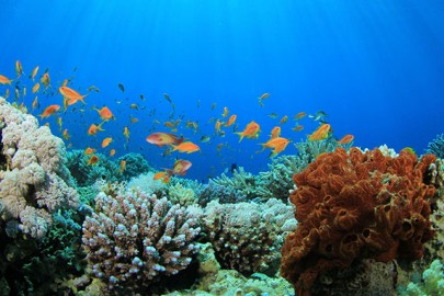 western-caribbean-coral-reef-in-grand-cayman