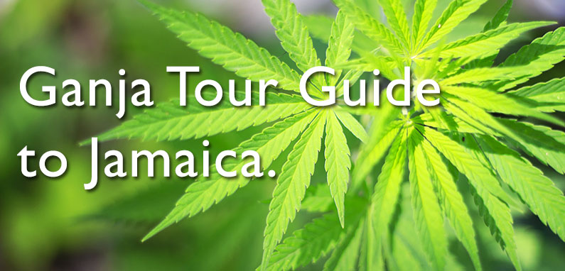 ganja-tour-guide-jamaica